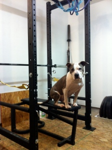 11 Guage Steel - Garage Gym Dog Approved!